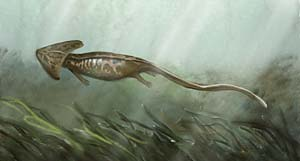 Other amphibians that lived during the Carboniferous and Permian times    Devonian Amphibians